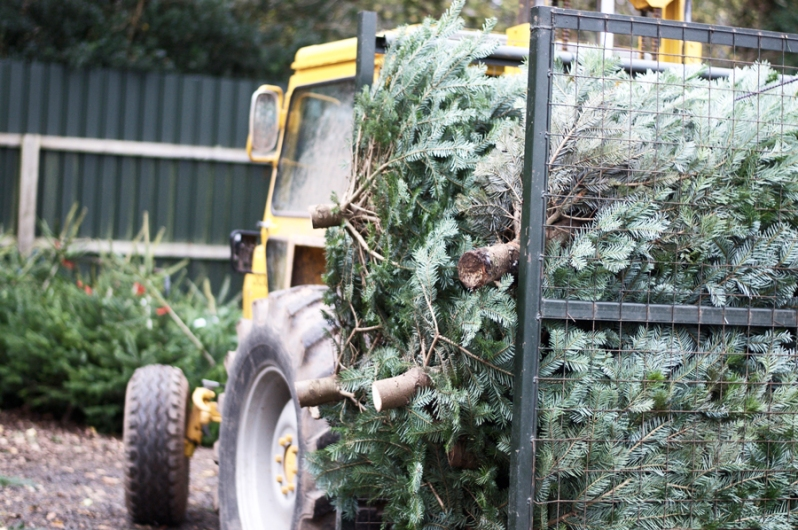 Special Moments: Christmas Tree Picking